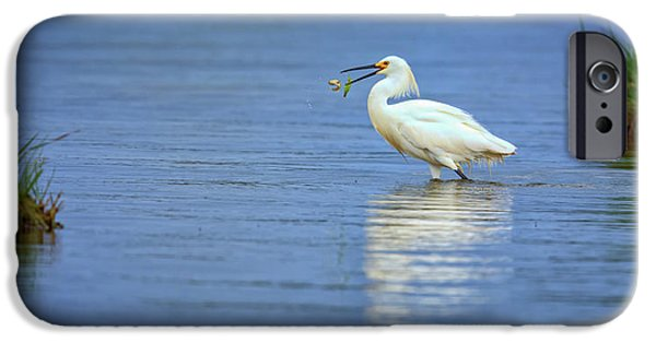 Snowy Egret At Dinner IPhone 6s Case by Rick Berk