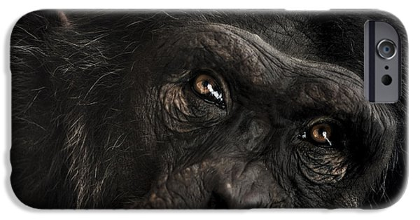 Chimpanzee iPhone 6s Case - Sorrow by Paul Neville