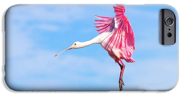 Spoonbill Ballet IPhone 6s Case by Mark Andrew Thomas