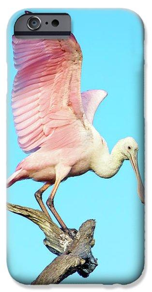 Spoonbill Flight IPhone 6s Case