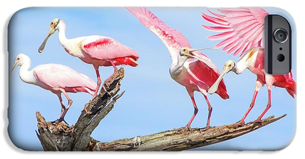Spoonbill Party IPhone 6s Case by Mark Andrew Thomas