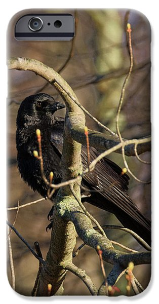 IPhone 6s Case featuring the photograph Springtime Crow by Bill Wakeley