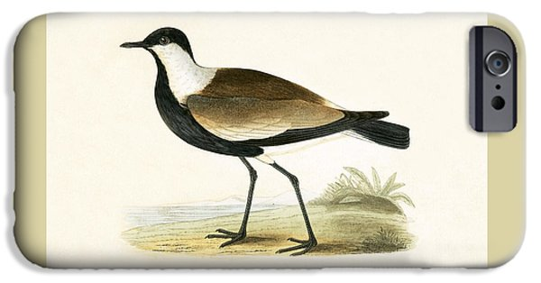 Lapwing iPhone 6s Case - Spur Winged Plover by English School