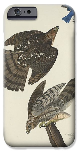 Stanley Hawk IPhone 6s Case by Dreyer Wildlife Print Collections