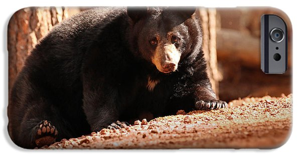 Bear iPhone 6s Case - Staredown by Rob Blair