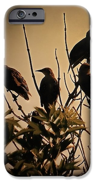 Starlings IPhone 6s Case