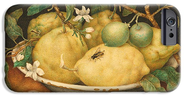 Still Life With A Bowl Of Citrons IPhone 6s Case by Giovanna Garzoni