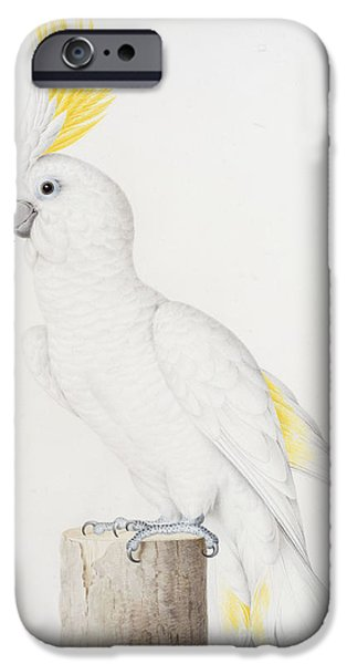 Cockatoo iPhone 6s Case - Sulphur Crested Cockatoo by Nicolas Robert