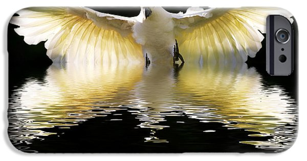 Cockatoo iPhone 6s Case - Sulphur Crested Cockatoo Rising by Sheila Smart Fine Art Photography