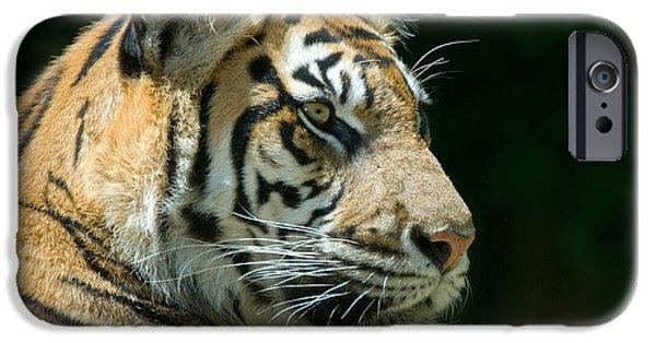 Animals iPhone 6s Case - Sumatran Tiger by Mary Lane