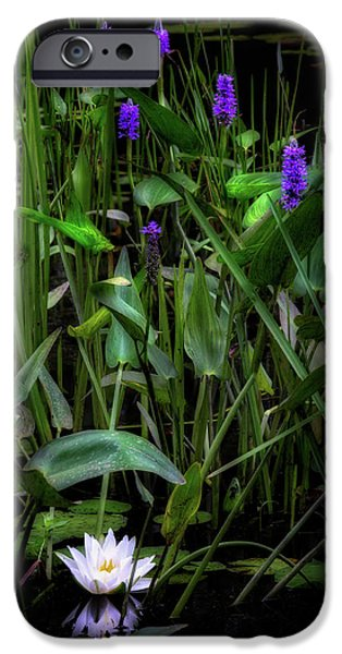 IPhone 6s Case featuring the photograph Summer Swamp 2017 by Bill Wakeley