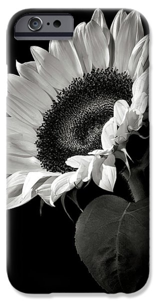 Flowers iPhone 6s Case - Sunflower In Black And White by Endre Balogh