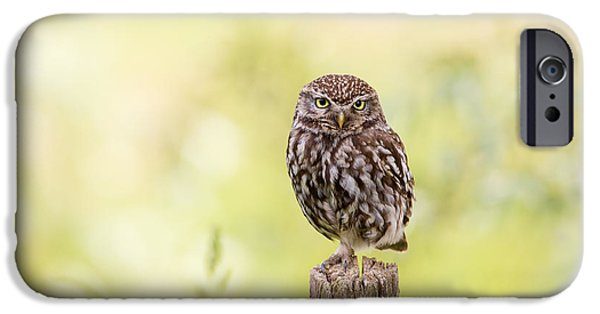 Sunken In Thoughts - Staring Little Owl IPhone 6s Case