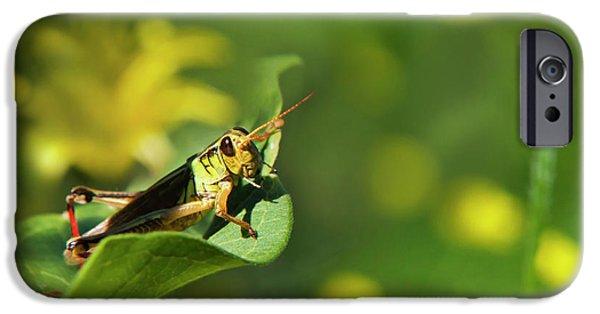 Green Grasshopper IPhone 6s Case