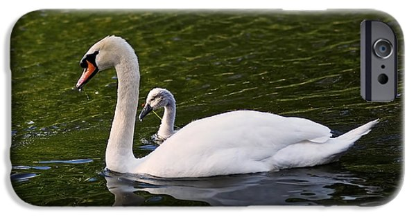 Swan Mother With Cygnet IPhone 6s Case by Rona Black