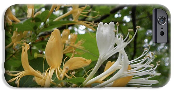 Sweet Honeysuckle Shrub IPhone 6s Case