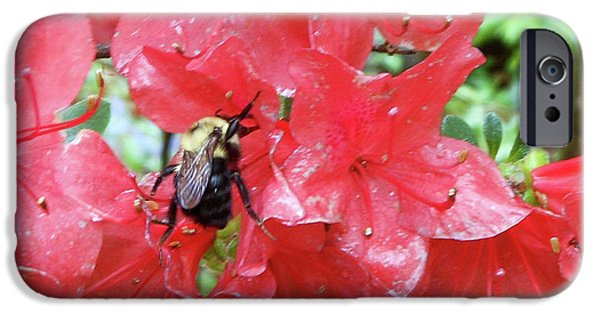 Sweet To Be An Azalea Tree IPhone 6s Case