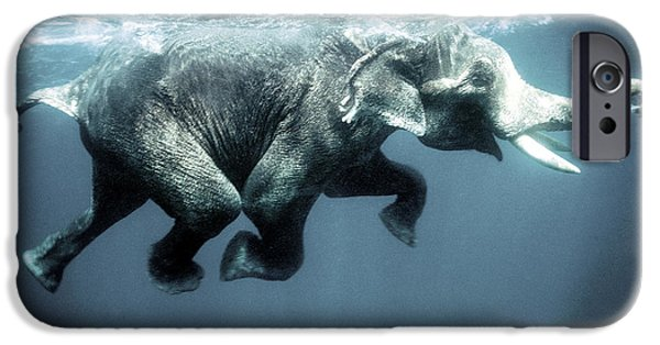 Swimming iPhone 6s Case - Swimming Elephant by Olivier Blaise