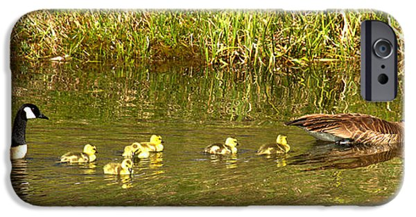 Gosling iPhone 6s Case - Swimming With The Youngsters At Schwabacher Landing by Adam Jewell