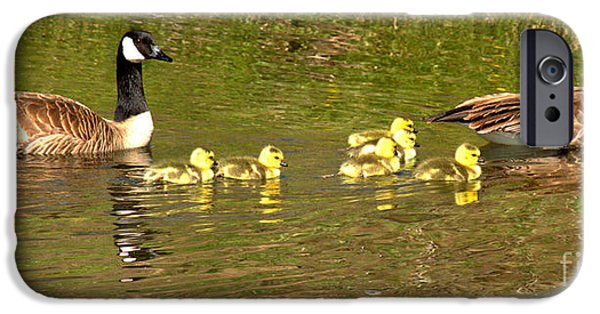 Gosling iPhone 6s Case - Swimming With The Youngsters In Teton by Adam Jewell