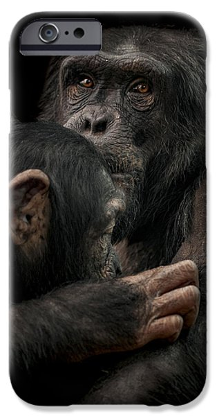 Chimpanzee iPhone 6s Case - Tenderness by Paul Neville