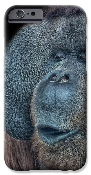 Orangutan iPhone 6s Case - That Oooh Moment by Martin Newman