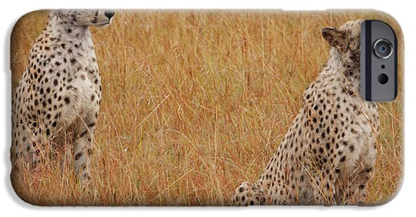 The Cheetahs IPhone 6s Case by Nichola Denny