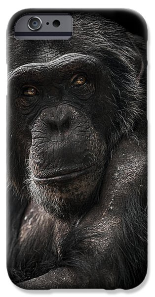 Chimpanzee iPhone 6s Case - The Contender by Paul Neville