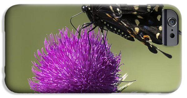 The Eastern Black Swallowtail  IPhone 6s Case by Ricky L Jones