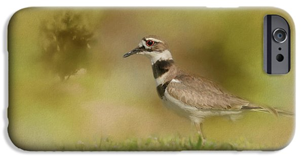 The Elusive Killdeer IPhone 6s Case by Jai Johnson