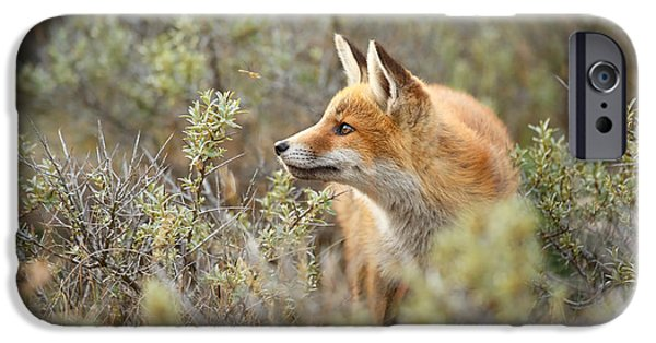 The Fox And Its Prey IPhone 6s Case