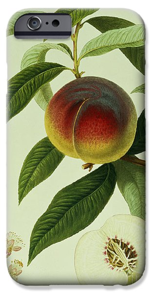 The Galande Peach IPhone 6s Case by William Hooker