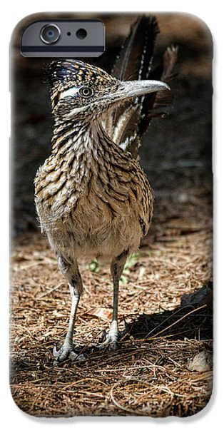 The Greater Roadrunner Walk  IPhone 6s Case