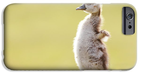 Gosling iPhone 6s Case - The Happy Chick - Happy Easter by Roeselien Raimond