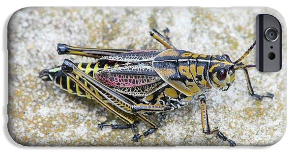 The Hopper Grasshopper Art IPhone 6s Case by Reid Callaway