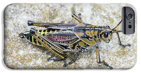 The Hopper Grasshopper Art IPhone 6s Case