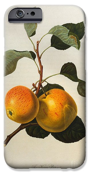 The Kerry Pippin IPhone 6s Case by William Hooker