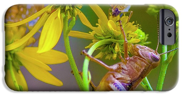 Grasshopper iPhone 6s Case - The Little Things by Betsy Knapp