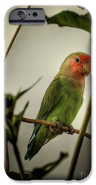 The Lovebird  IPhone 6s Case by Saija  Lehtonen