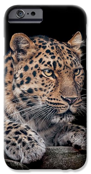 Leopard iPhone 6s Case - The Night Watchman by Paul Neville