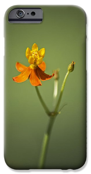 The One - Asclepias Curassavica - Butterfly Milkweed IPhone 6s Case by Johan Hakansson