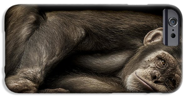 Chimpanzee iPhone 6s Case - The Teenager by Paul Neville