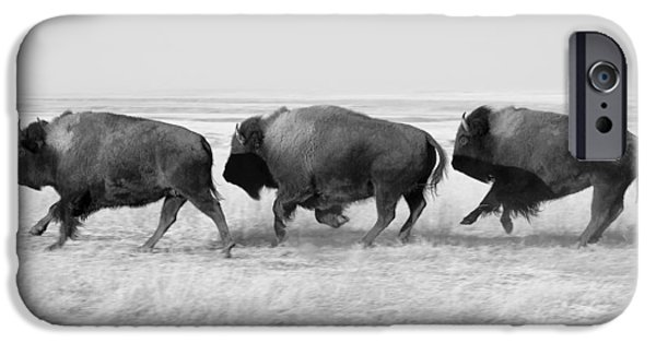 Three Buffalo In Black And White IPhone 6s Case by Todd Klassy
