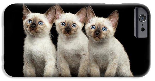 Cat iPhone 6s Case - Three Kitty Of Breed Mekong Bobtail On Black Background by Sergey Taran