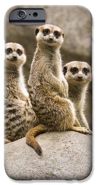Meerkat iPhone 6s Case - Three Meerkats by Chad Davis