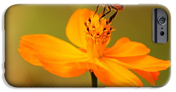 Nature iPhone 6s Case - Tiny Dancer by Marion Cullen