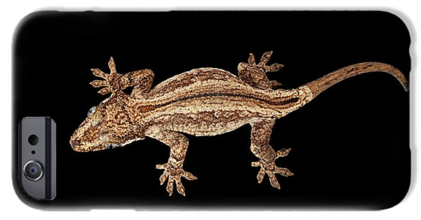 Top View Of Gargoyle Gecko, Rhacodactylus Auriculatus Staring Isolated On Black Background. Native T IPhone 6s Case