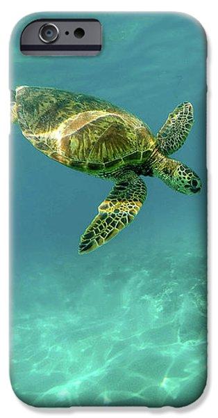 Tortoise IPhone 6s Case