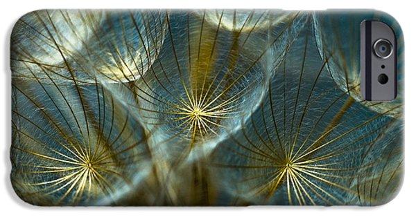 Nature iPhone 6s Case - Translucid Dandelions by Iris Greenwell