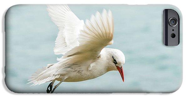 Tropic Bird 4 IPhone 6s Case